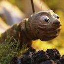 02-larva-fida